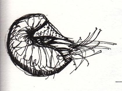 sketch_nautilus